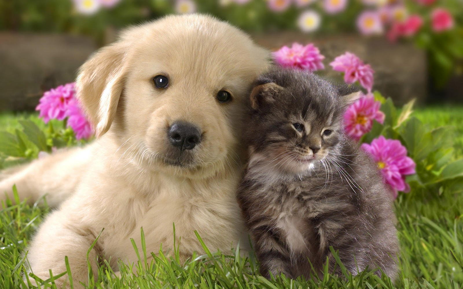 hd-cats-wallpapers-cute-cat-and-dog-cuddling-backgrounds